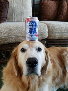 pabst dog tw 2816